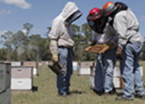 Open Letter to American Beekeepers