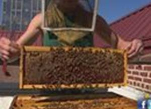 Urban Buzz: The secret life of Raleigh bees