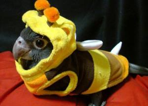 Scout Bee